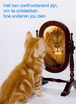 Kat ziet Leeuw in de spiegel